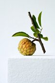 A cherimoya wwith a sprig and leaves