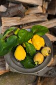 Fresh quinces with leaves on an old pewter plate on a stack of wood