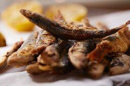 Fried sardines (close-up)