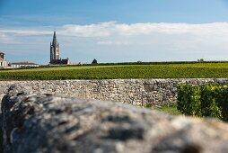 Weinanbaugebiet Saint-Emilion, Bordeaux, Frankreich