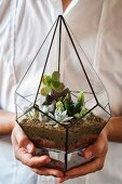 Succulents in miniature terrarium held in hands