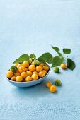 Cape gooseberries in a blue dish
