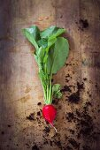 A radish on a wooden background