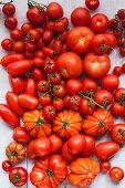 Verschiedene rote Tomaten