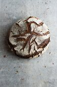 Tourte Auvergnate (French sourdough rye bread)