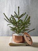 Small conifer tree planted in copper saucepan