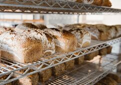 Tin loaves on metal shelves after being baked in a coal-fired oven in a small countryside bakery