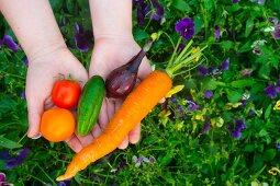 Hands holding freshly picked garden vegetables