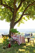 Table set for picnic and rustic wooden benches below apple tree