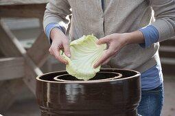 Making sauerkraut yourself