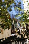 Wine glasses and bottles in Deidesheim, Rhineland-Palatinate, Germany