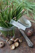 Pine needles in a preserving jar with acorns and a little nameplate