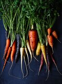 Different coloured carrots (seen from above)