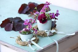 Horned violet on a white enamel plate with hay balls