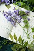 Wisteria raceme on sketch book