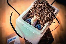 Fisch-Onlinehandel: Verpackte Tintenfische mit Mineralwasserflaschen als Kühlelement