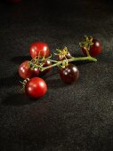 A branch of Helsing Junction Blues tomatoes
