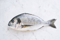 Fresh seabream at marble table