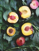 Halved peaches, apricots and plums on leaves (top view)
