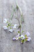 Frisches Wiesenschaumkraut mit Blüten