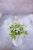 Flowering woodruff in a crystal vase
