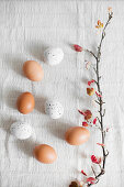Brown eggs, white, speckled eggs and flowering branch on white cloth