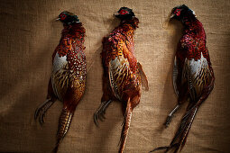 Three unplucked pheasants on a linen cloth