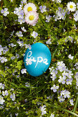 Blaues Ei mit Tafelfarbe bemalt und mit Schriftzug 'Papa' auf Frühlingswiese liegend