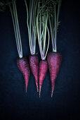 Violet carrots (Daucus carota)