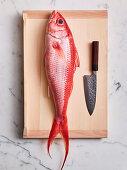Frischer Fisch und Filetiermesser auf Schneidebrett
