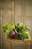 A still life with different cabbages