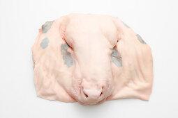 A calf's face