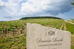 Grand Cru, Les Clos, Domaine Laroche