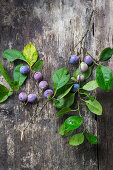Branches with blue plums on wooden background