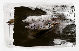 Food art: salmon heads on a black-and-white painted surface