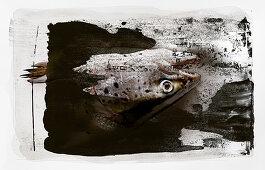 Food-Art: Lachskopf auf schwarz-weiß bemaltem Untergrund