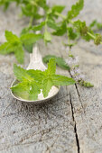 Fresh mint on a silver spoon