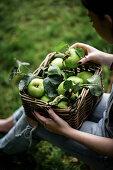 A woman sorting Bramley apples in a wicker basket