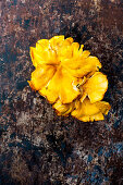 Chanterelle - wild mushrooms