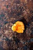 Lactarius deliciosus - wild mushroom