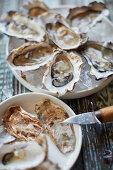 Austern in Schale, geöffnet