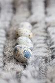Quail eggs on fur