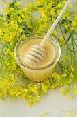 Rape seed honey