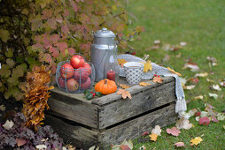Old wine crate decorated for autumn with apples, pumpkin, milk churn and cup of tea