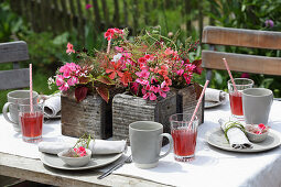 Set garden table decorated with geraniums and coleus in wooden pots