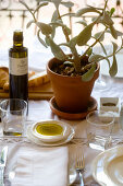 Table set with plant and olive oil