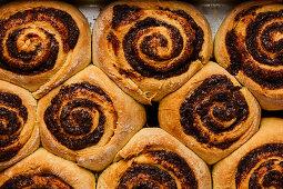Freshly baked cinnamon rolls in a baking tin