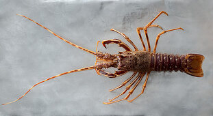 A crayfish on a grey surface