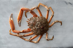 A large spider crab