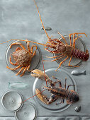 A spider crab, a lobster and a crayfish